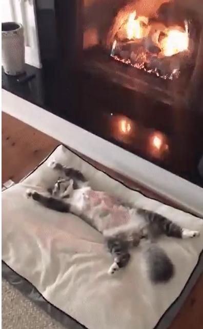 Кот-поэт