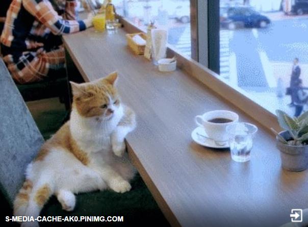 Кофе и кошка
